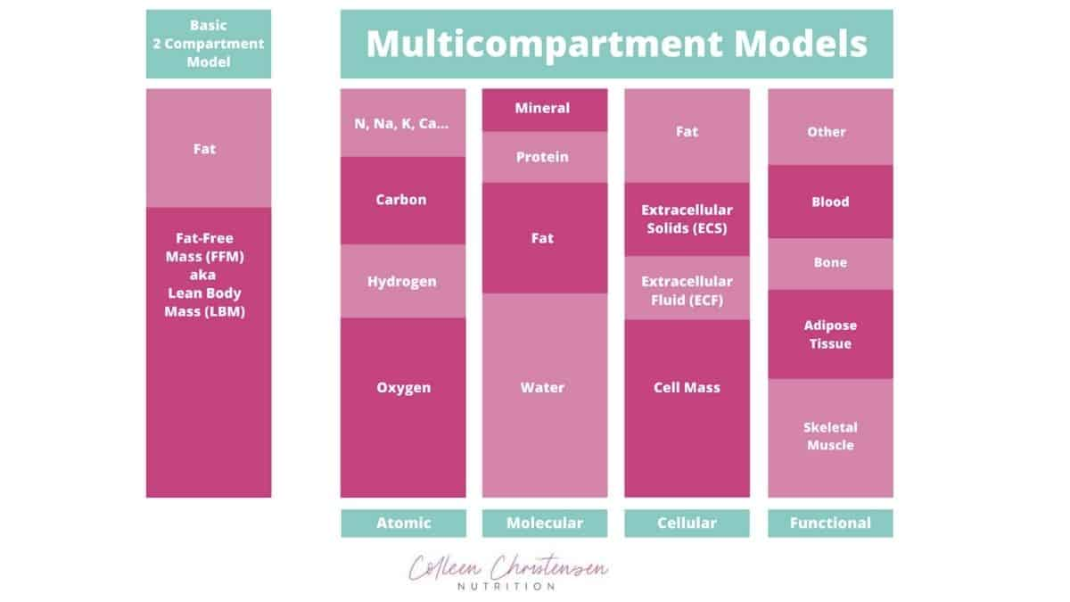 2 compartment method VS multicompartment method of body composition..