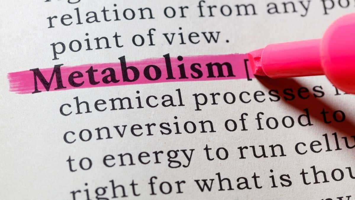 metabolism being highlighted.