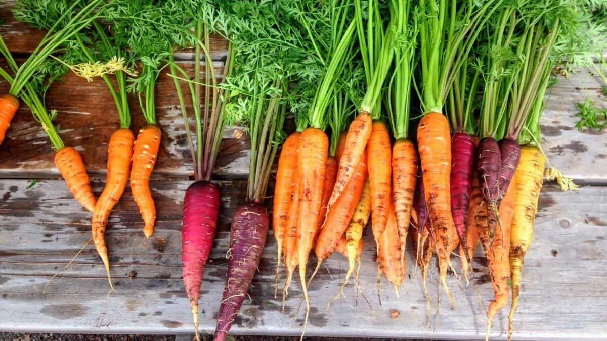 colorful whole carrots, an example of anti-inflammatory foods.