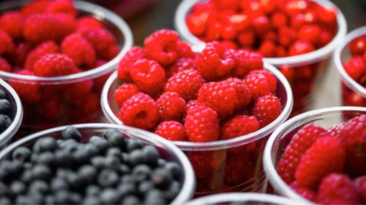 bowls of blueberries and raspberries in clear containers; approved for the Thermodiet.